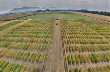 Applications of machine learning for choosing crop varieties